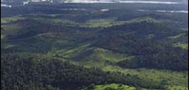 La selva amazónica es fertilizada por polvo que llega de África.