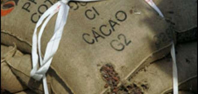 En el fruto del árbol de cacao están las semillas con las cuales se obtiene el chocolate.