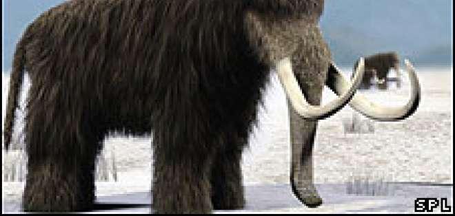 La desaparición de las grandes extensiones de pasto habría conducido a la extinción los mamuts.