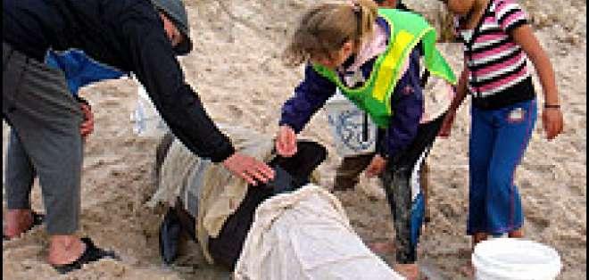 Los lugareños tratan de salvar a las que aún respiran.
