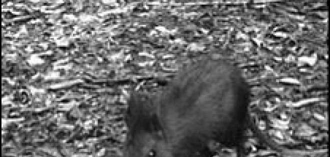Este descubrimiento podría elevar el total de especies conocidas a 18.