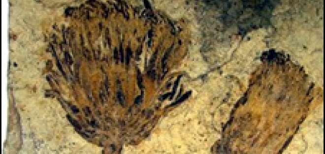 El fósil pertenece a la familia de las Asteraceae.