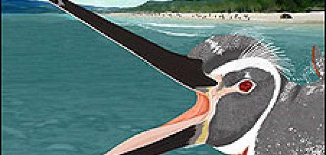 Reconstrucción animada de Katie Browne del fósil del pingüino Pedro.
