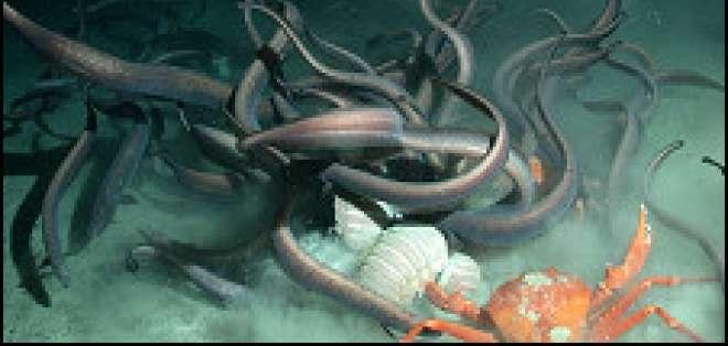Los científicos estiman el total de especies marinas conocidas en 250.000.