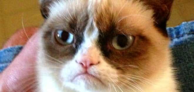 Llegó la hora de la gran pantalla para Grumpy Cat.