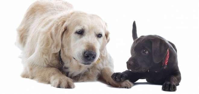 Calcular la edad de una perro solía ser sencillo