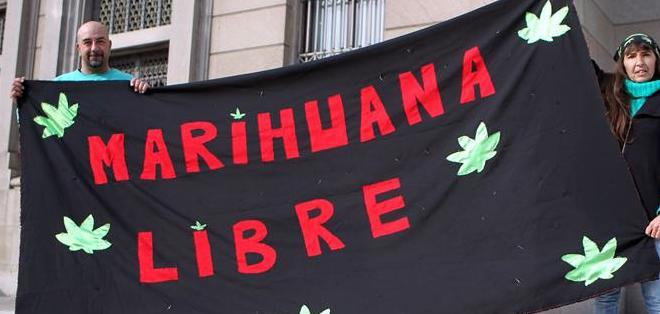 El proyecto de ley establece que se crearán los registros correspondientes para la producción, el autocultivo y el acceso a la marihuana a través de farmacias. Foto: EFE.