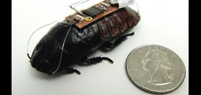 Desarrollan software que usa insectos robots para recabar información.