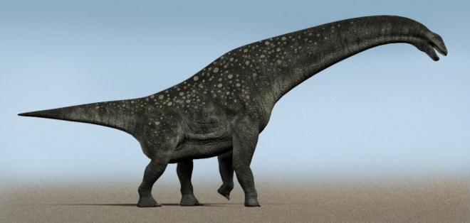 CIENCIA.- Los científicos descubrieron partes de la cola de un Titanosaurus, un tipo de dinosaurio vegetariano que medía al menos 20 metros. Fotos: Internet
