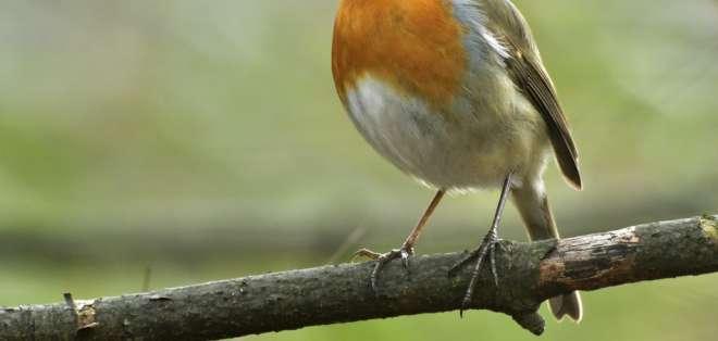 Un científico ha creado un programa informático que decodifica el canto de los pájaros