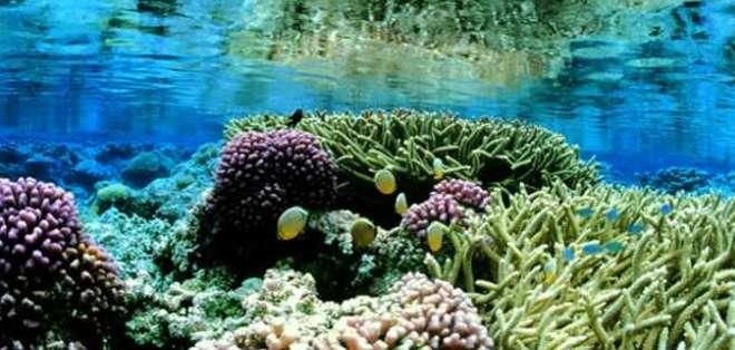 La decisión de Obama de ampliar el área protegida a 200 milles náuticas desde los atolones fue bien recibida por grupos ecologistas.