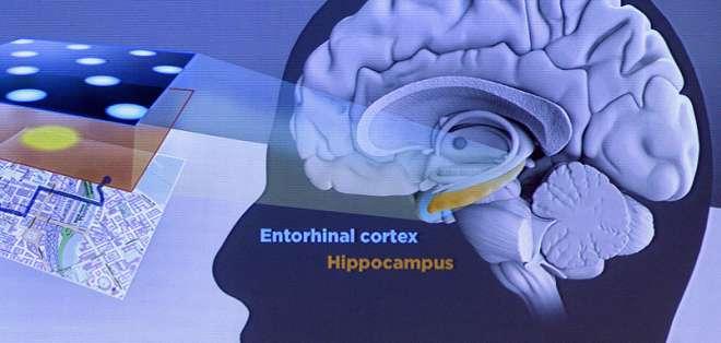 """Descubridores del """"GPS del cerebro"""" ganan Premio Nobel de Medicina 2014."""
