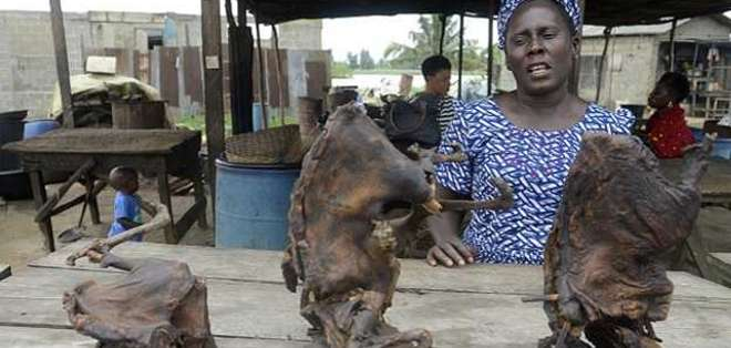 Los africanos están acostumbrados a comer carne de animales silvestres.