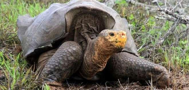 Tortugas de las Islas Galápagos