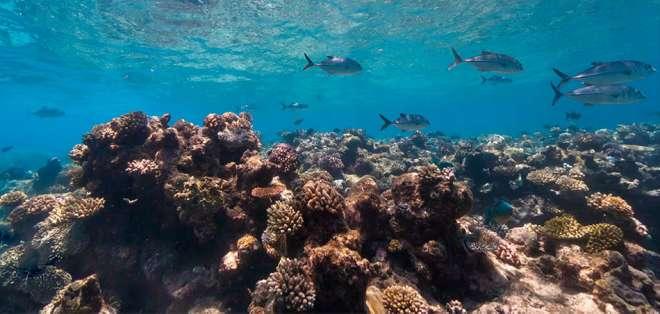 Por primera vez está disponible el mapeo en 3D de un lugar bajo el agua, en este caso la Gran Barrera de Coral, en la costa nororiental de Australia.