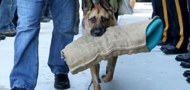 El perro desfiló entre el cordón de policías con su juguete favorito en la boca.
