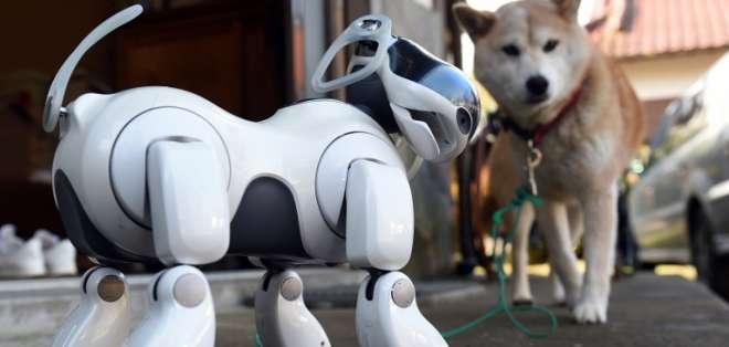 Estos perros capaces de desarrollar una personalidad se convirtieron en miembros de varas familias en Japón. Fotos: AFP.