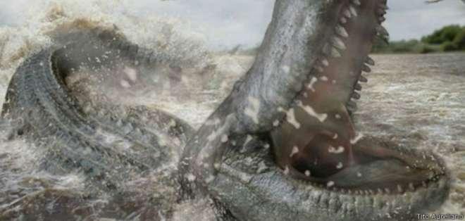El Purussaurus brasiliensis fue descubierto en el siglo XIX.