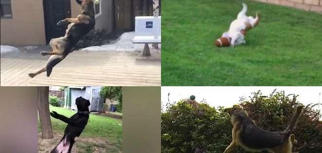 A los perros les encanta atrapar en forma de juego cualquier objeto que les lances.