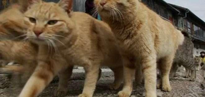 La gran colonia de gatos se terminó por convertir en una atracción turística.