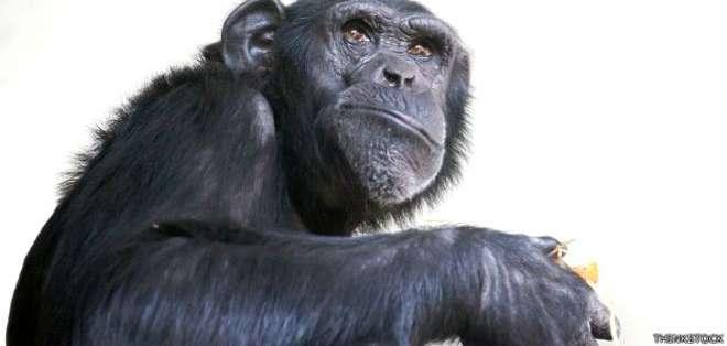 Lasprácticas sexuales de algunos animales pueden ser descritas como extrañas.