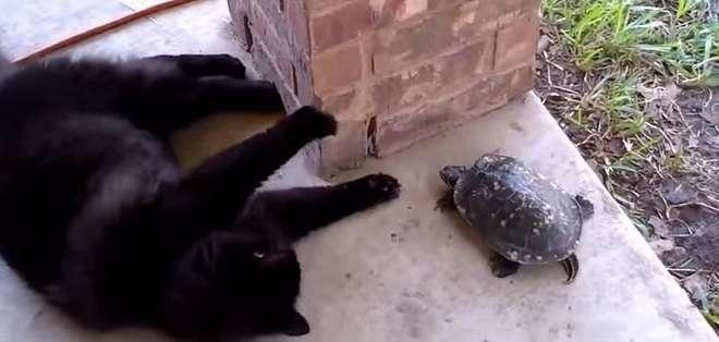 El video fue publicado el 2 de marzo último y se encuentra en la cuenta del usuario 'Catss'.