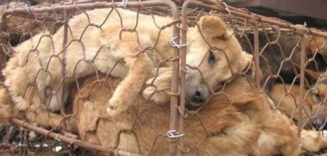 En sus investigaciones han dado con granjas donde se maltratan animales para quitarles su piel y lana, publicando videos de estas prácticas. Foto: PETA.