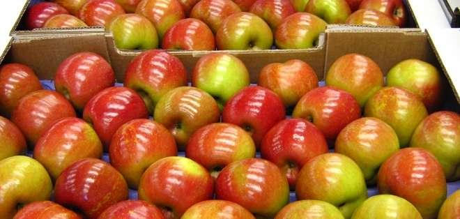 El Servicio Nacional de Aduana indica que hasta el lunes de esta semana, más de 223.000 frutas que ingresaron al país han pagado más de 100.000 dólares.