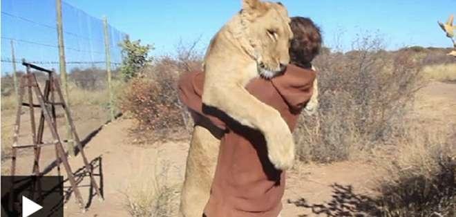 Sirga no puede vivir en libertad porque no le tiene miedo a los humanos.