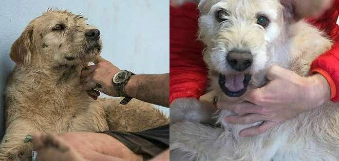 El can ecuatoriano fue liberado de cuarentena en Suecia y ahora comparte con su nueva familia.
