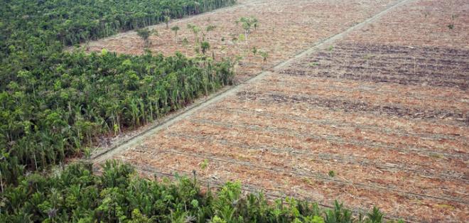 El corte raso de la vegetación fue de 1.702 km2 entre agosto de 2014 y febrero de 2015.