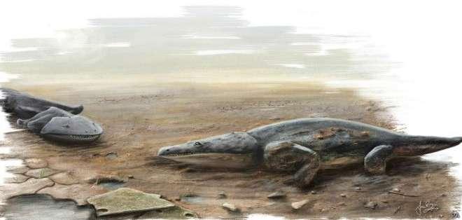 Los restos del Metoposaurus algarvensis se encontraron en una excavación en el sur de Portugal.