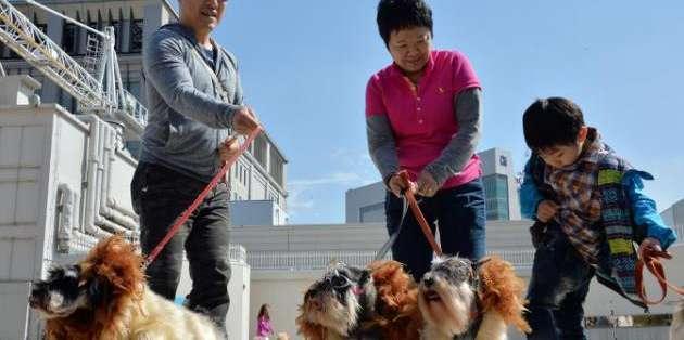 JAPÓN, Tokio.- En Tokio se puede pagar por estar en un lugar para gozar del amor incondicional de un perro. Foto: AFP/Archivo