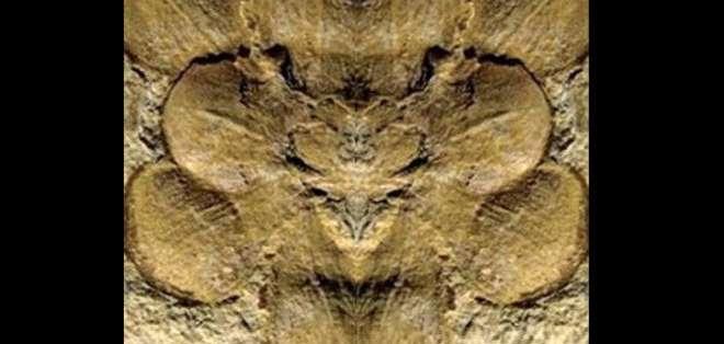 """CHINA.- Denominada """"Euanthus panii""""-, esta flor podría tener una antigüedad de 162 millones de años. Foto: Internet"""