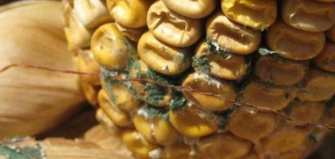 SALUD.- Los alimentos contaminados provocarían más de 200 enfermedades, según informe de la FAO. Foto: Archivo