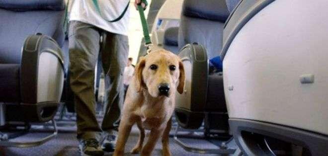 Organizaciones denuncian que cada vez hay más personas que hacen pasar a sus mascotas por perros guía calificados.