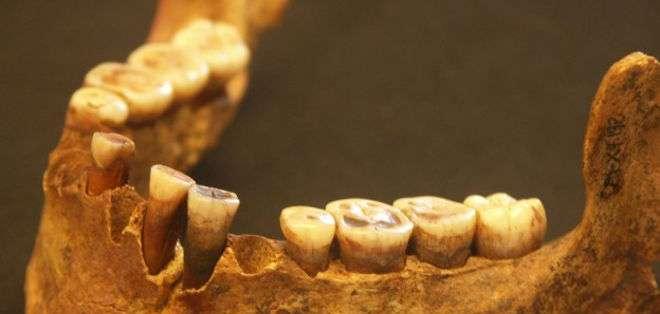 El sarro preservado entre sus dientes muestra que su dieta era rica en carne.