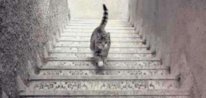 Un usuario de Twitter publicó la foto de un felino en una escalera y entonces la pregunta surgió: ¿sube o baja las escaleras?