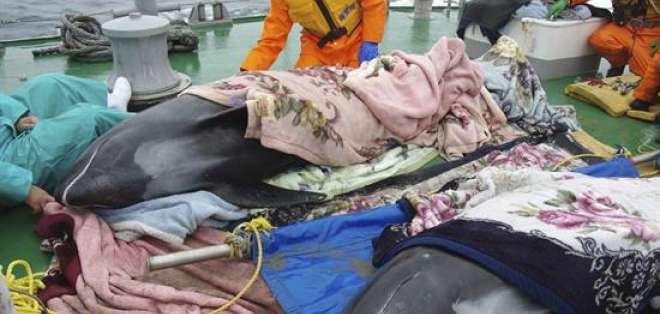 JAPÓN.- Algunos ejemplares han muerto y otros están heridos o se muestran cada vez más débiles. Foto: AFP