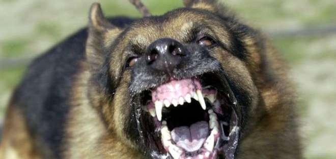 La rabia es una infección viral mortal que se transmite sobre todo por mordedura de perros infectados.