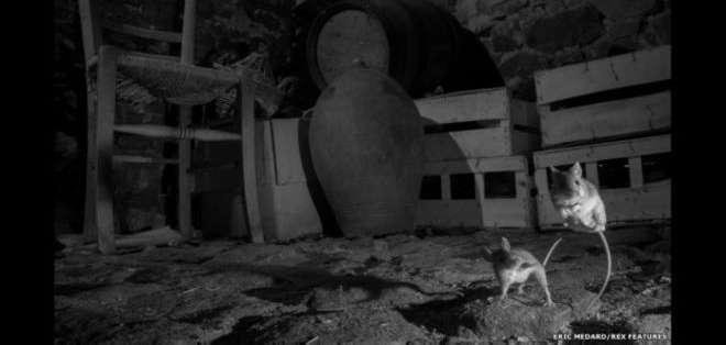 Eric Méhard logra captar con una cámara infrarroja algunos momentos cotidianos de criaturas que prefieren no ser vistas a la luz del día.