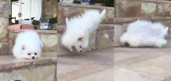El pequeño perro corre muy animado para recibir a su dueño, quien lo graba desde su celular en slow motion.