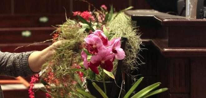 QUITO, Ecuador.- El costo de cada orquídea varía, desde los 20 dólares hasta los 170 dólares. Habrá 200 especies. Fotos: API