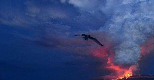 GALÁPAGOS.- Autoridades harán un sobrevuelo para determinar la situación actual del coloso, ubicado en Isabela. Fotos: Parque Nacional Galápagos