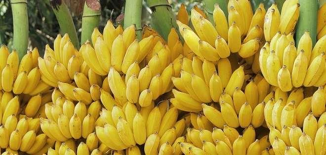 En 2014 Ecuador exportó al país asiático 232.181 toneladas de banano.