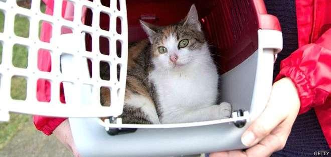 En su medio natural los gatos tienden a protegerse escondiéndose en arbustos o madrigueras