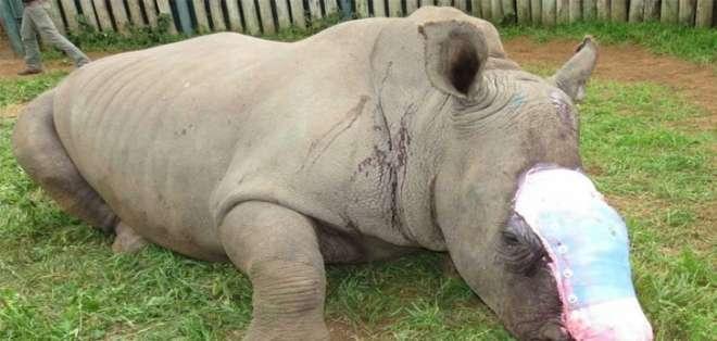 El pequeño animal de 4 años fue hallado en una reserva natural en Cabo Este, Sudáfrica.