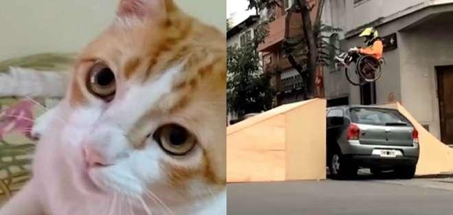 Un conmovedor truco de magia, un gato que canta y un castigo extremo pero ejemplar fueron tendecia en las redes esta semana.