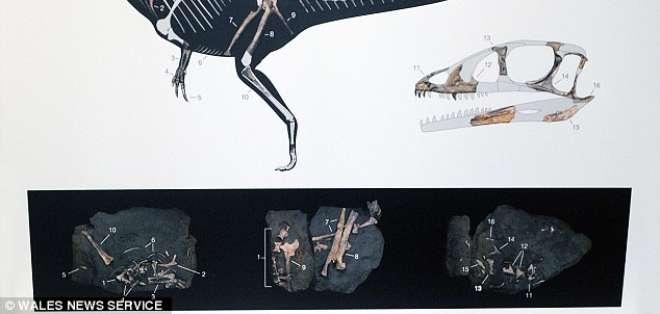 El fósil pertenece a un pequeño terópodo que vivió hace 200 millones de años.