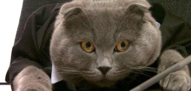 Según CNN, la compañía que contrató al gato declaró que percibirá 2.400 euros anuales. Foto Web.